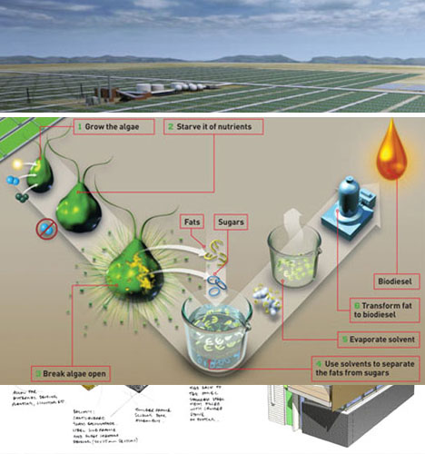 18-car-powering-algae-farm
